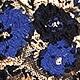 Multicolor(A08090)